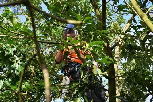 Domestic Tree Services Haywards Heath