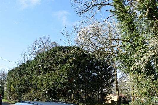 Domestic Tree Services Horsham