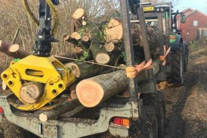 Emergency Tree Services Horsham