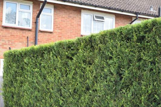 Hedge Maintenance Crawley