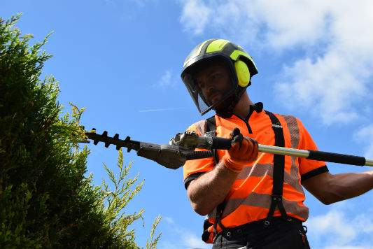 Hedge Maintenance Sussex
