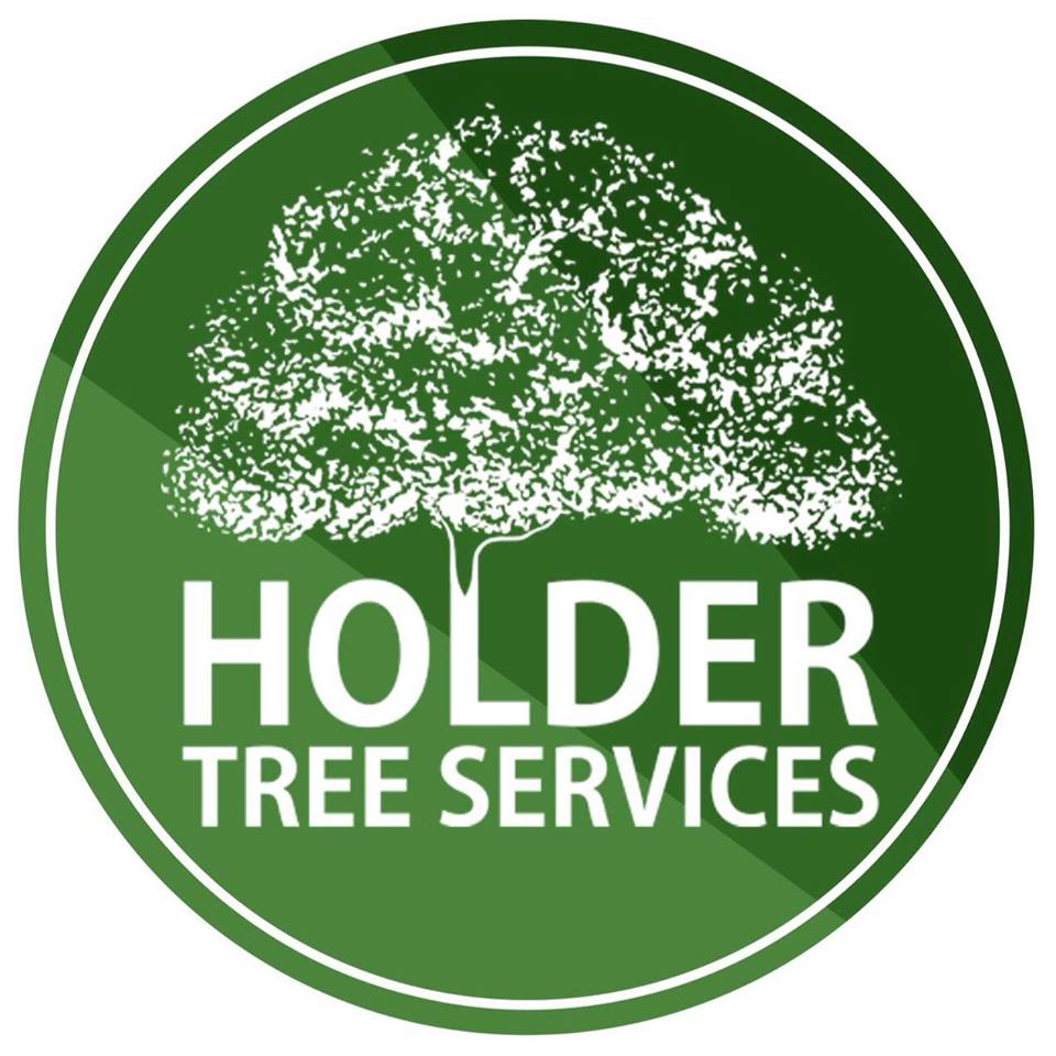 Domestic and commercial tree services covering Sussex, Surrey, Kent & London