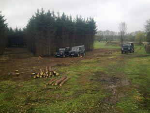 Tree Ecology Haywards Heath