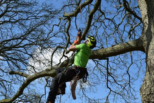 Tree-Maintenance-Brighton