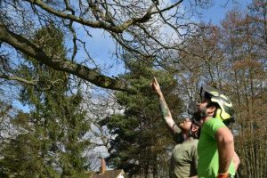 Tree-Maintenance-Haywards Heath West Sussex