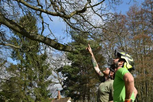 Tree-Maintenance-Haywards Heath West Sussex