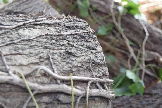 Tree-Maintenance-Horsham West Sussex