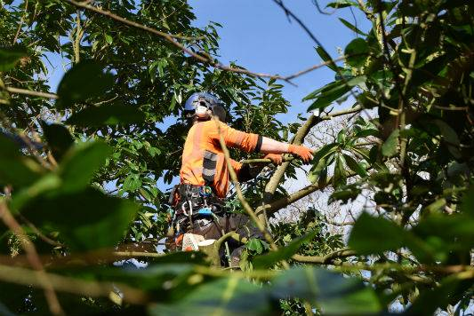 Tree-Maintenance-Sussex Surrey Kent London