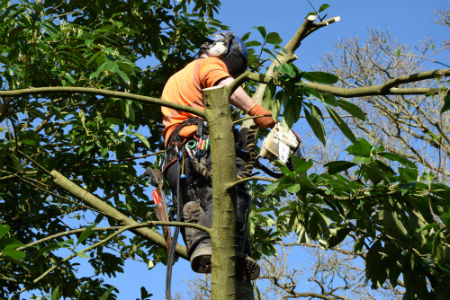 Tree Surgeons in Farnham