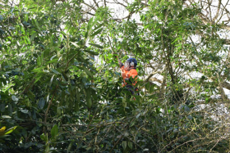 Tree Surgeons in Bognor Regis