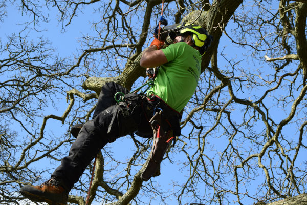 Tree Surgeons in Worthing