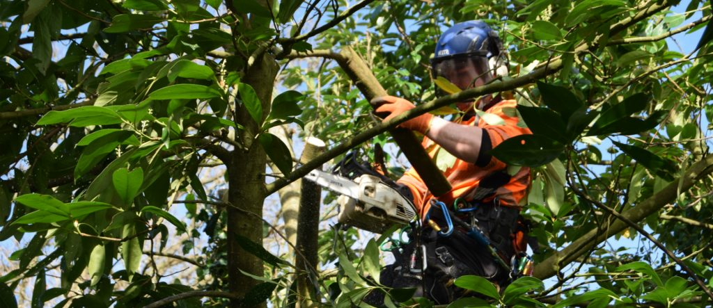Holder Tree Services - Footer