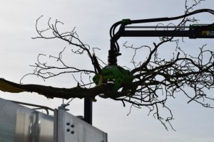 Holder Tree Services Waster Disposal