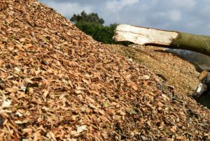 Arboricultural Recycling Centre - Sussex