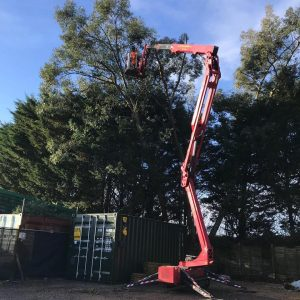Reducing a Large Row of Eucalyptus Trees Cowfold West Sussex 2