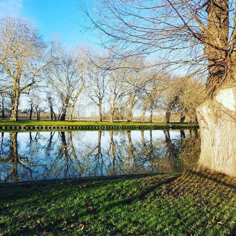 Tree Felling in Windsor