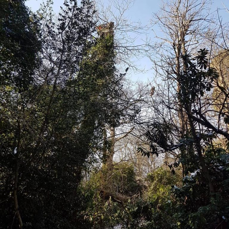 Tree Surgery in Croydon London