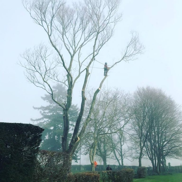Tree Takedown Over Swimming Pool in Kent