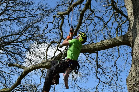 Arundel Tree Surgeons Sussex Holder Tree Services