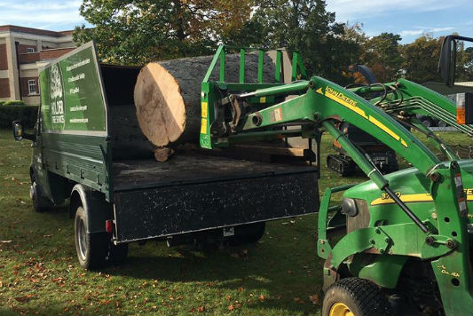Forestry Tree Services Sussex