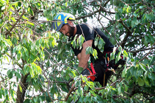Tree Surgery Arundel Sussex