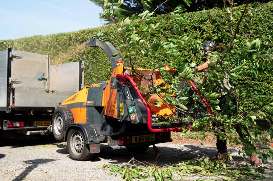 Tree Surgery Arundel West Sussex