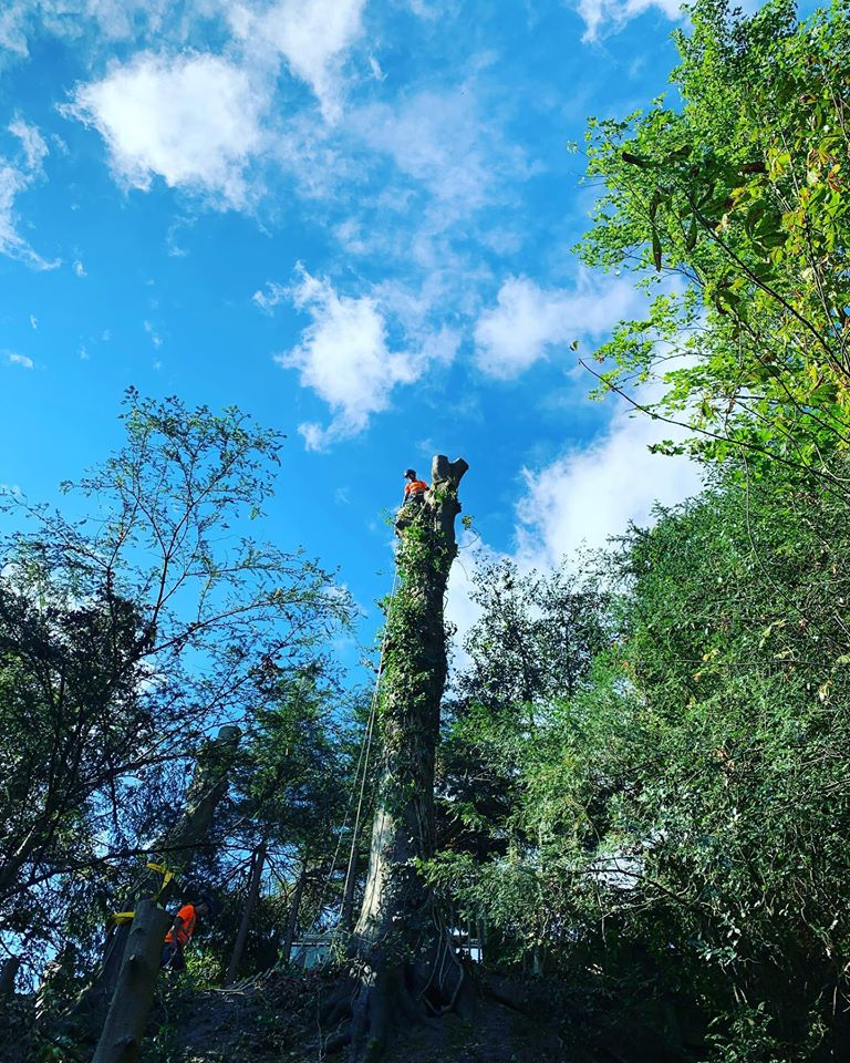 Tree Surgery Services in Midhurst